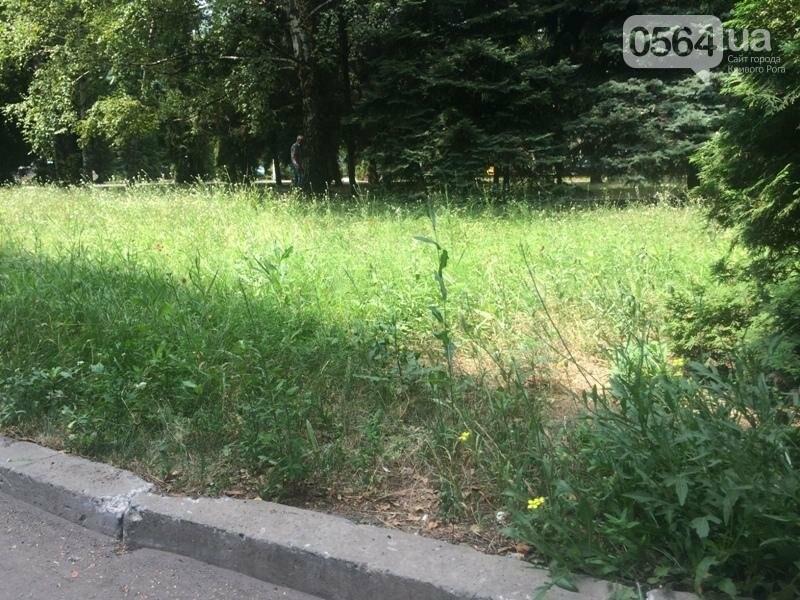 Криворожские власти заметили бурьян на территории больниц города (ФОТО), фото-2