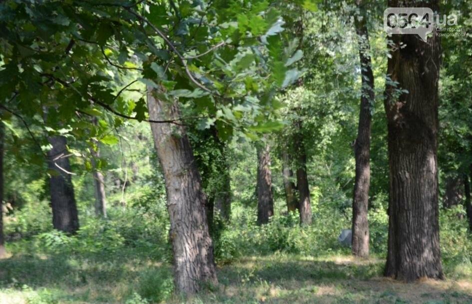 В каком из криворожских парков господствуют тишина, укромность и разруха? (ФОТО), фото-12