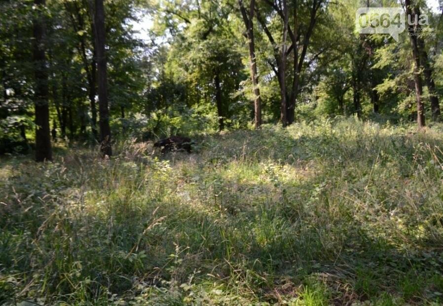 В каком из криворожских парков господствуют тишина, укромность и разруха? (ФОТО), фото-23