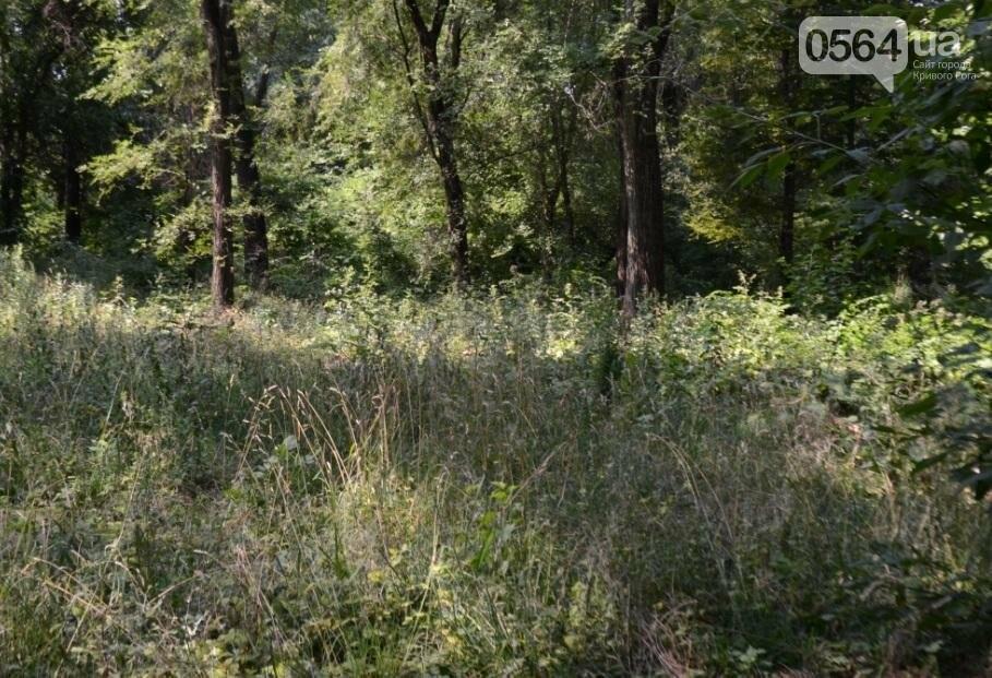 В каком из криворожских парков господствуют тишина, укромность и разруха? (ФОТО), фото-27