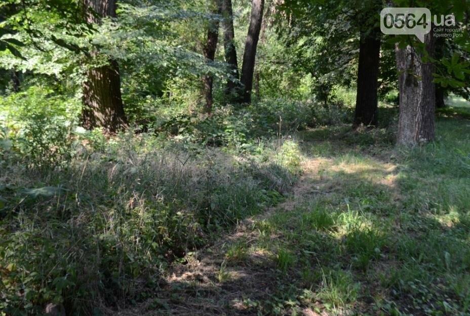В каком из криворожских парков господствуют тишина, укромность и разруха? (ФОТО), фото-24