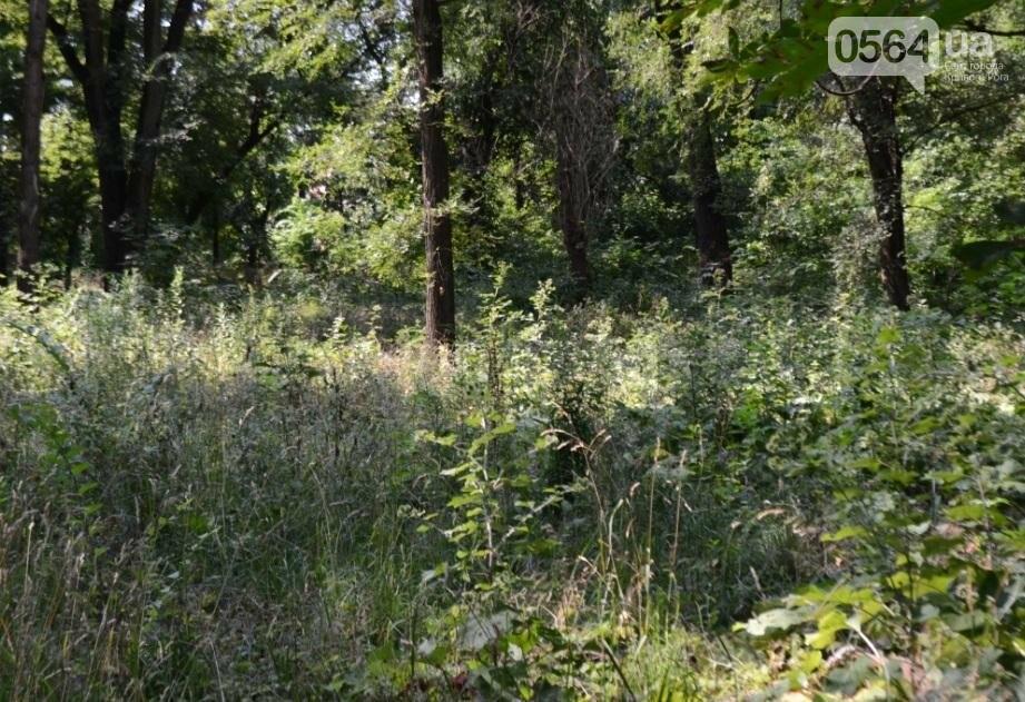 В каком из криворожских парков господствуют тишина, укромность и разруха? (ФОТО), фото-29