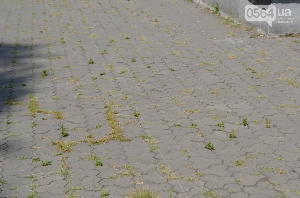 В каком из криворожских парков господствуют тишина, укромность и разруха? (ФОТО), фото-7