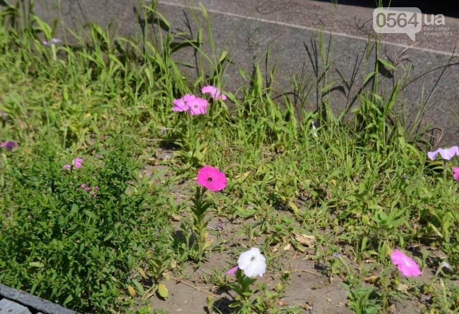 В каком из криворожских парков господствуют тишина, укромность и разруха? (ФОТО), фото-32