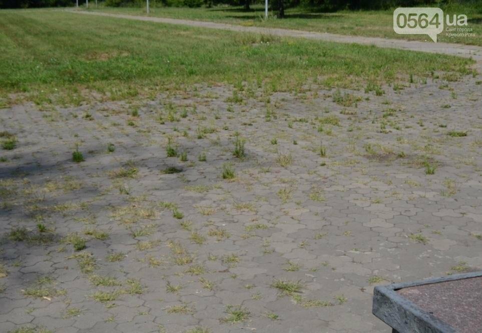 В каком из криворожских парков господствуют тишина, укромность и разруха? (ФОТО), фото-14