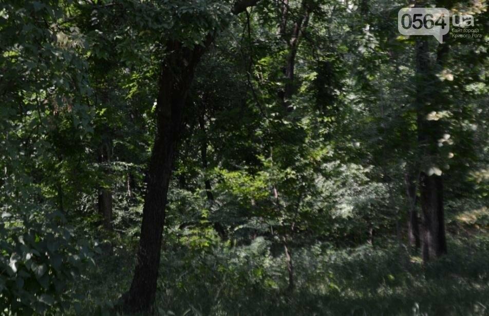 В каком из криворожских парков господствуют тишина, укромность и разруха? (ФОТО), фото-17