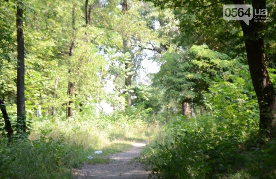В каком из криворожских парков господствуют тишина, укромность и разруха? (ФОТО), фото-22