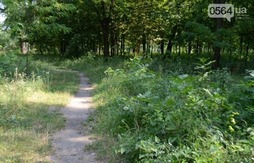 В каком из криворожских парков господствуют тишина, укромность и разруха? (ФОТО), фото-34