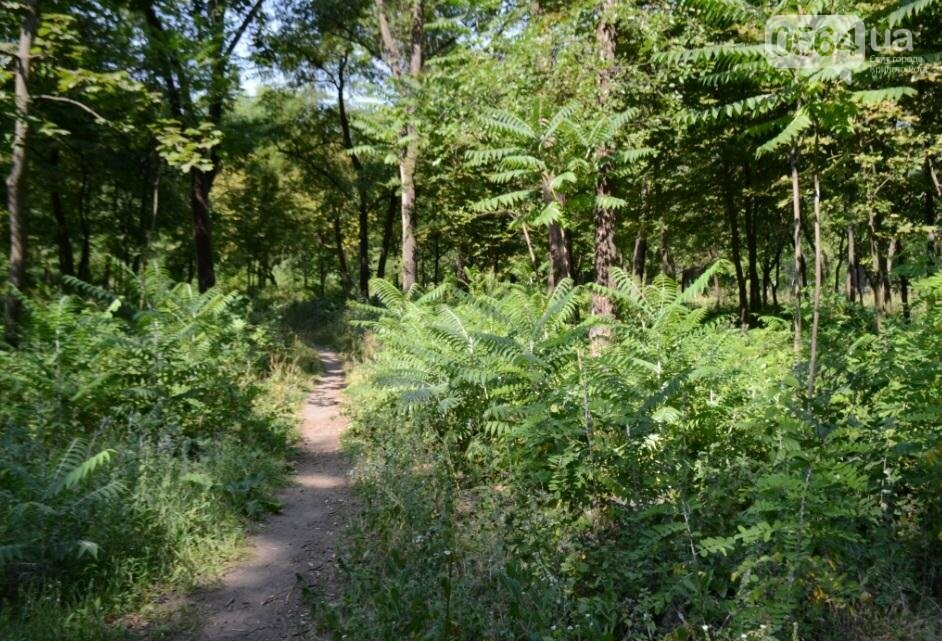В каком из криворожских парков господствуют тишина, укромность и разруха? (ФОТО), фото-36
