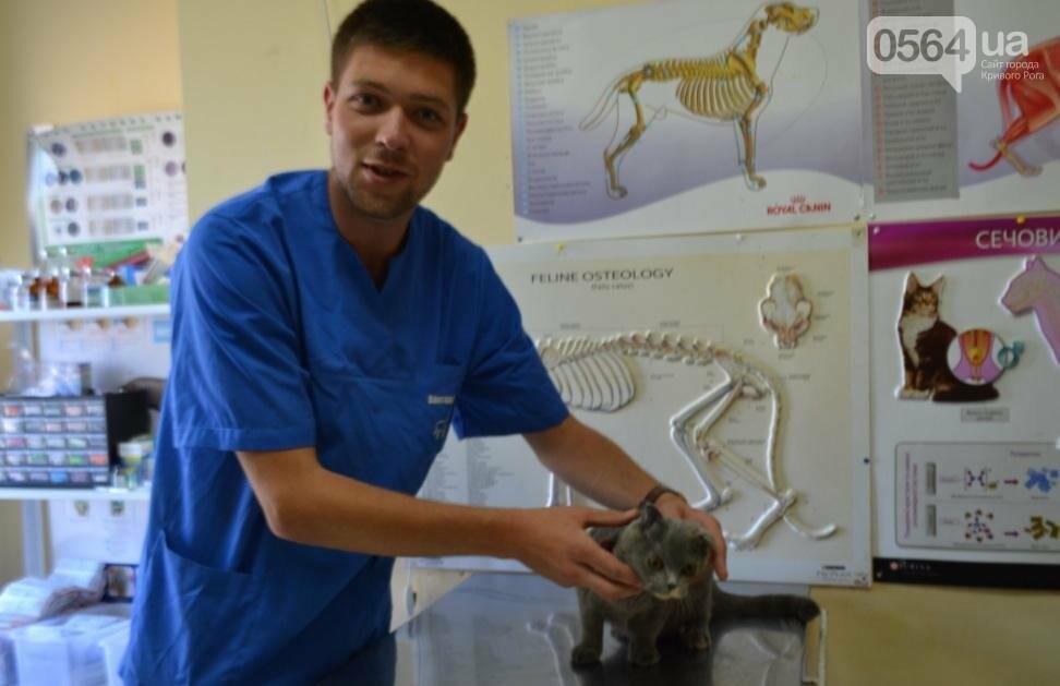 Без выходных: Как в Кривом Роге спасают хвостатых пациентов (ФОТО), фото-1