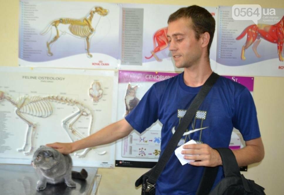 Без выходных: Как в Кривом Роге спасают хвостатых пациентов (ФОТО), фото-3
