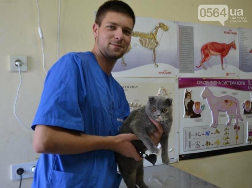 Без выходных: Как в Кривом Роге спасают хвостатых пациентов (ФОТО), фото-5