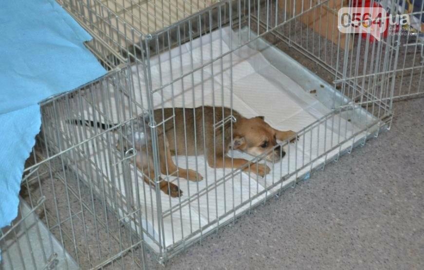 Без выходных: Как в Кривом Роге спасают хвостатых пациентов (ФОТО), фото-9