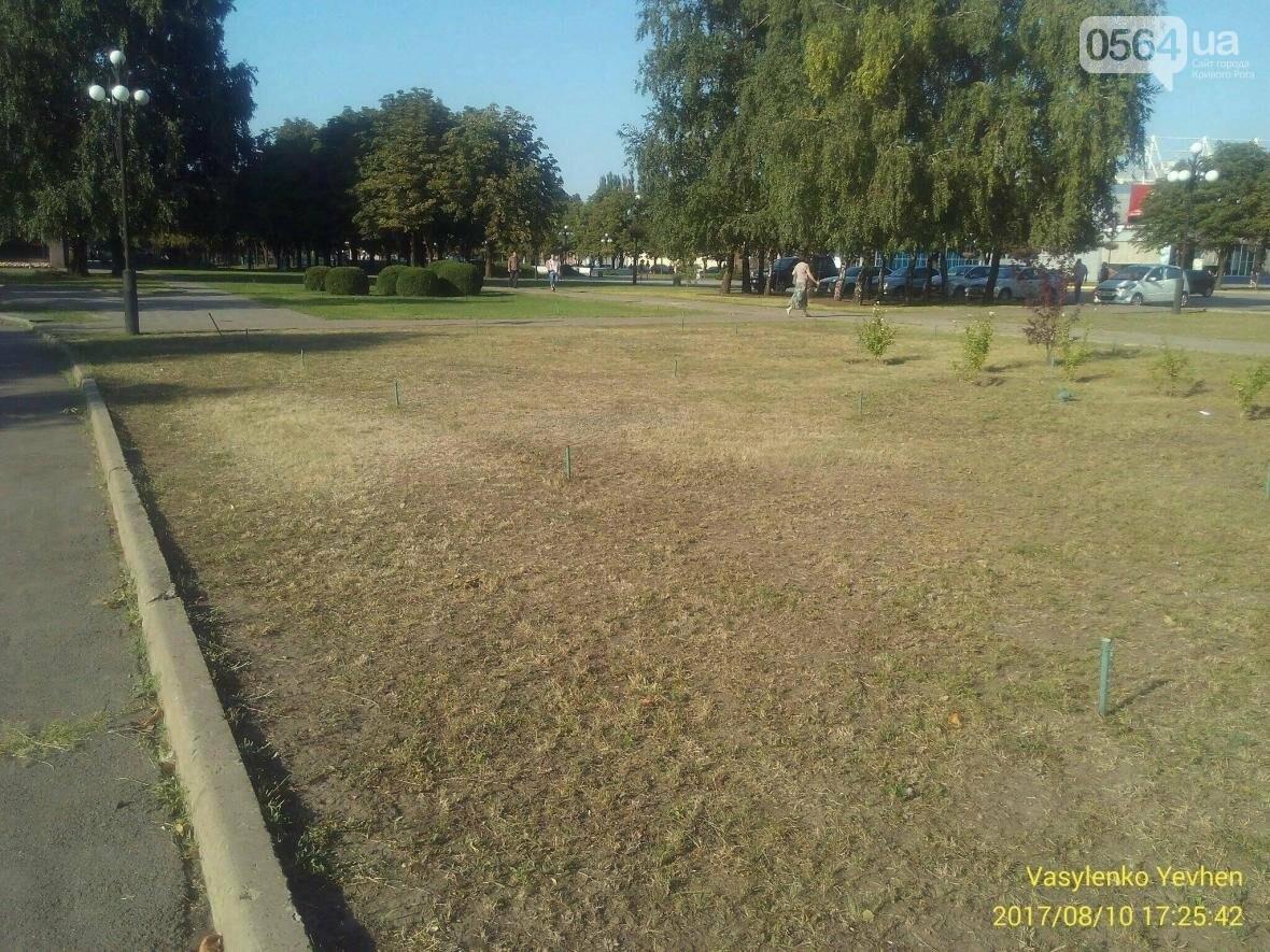"""В Кривом Роге большинство газонов находятся в """"деградированном"""" состоянии (ИНФОГРАФИКА), фото-10"""