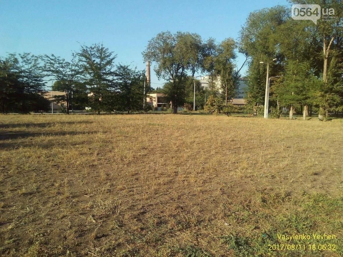 """В Кривом Роге большинство газонов находятся в """"деградированном"""" состоянии (ИНФОГРАФИКА), фото-13"""