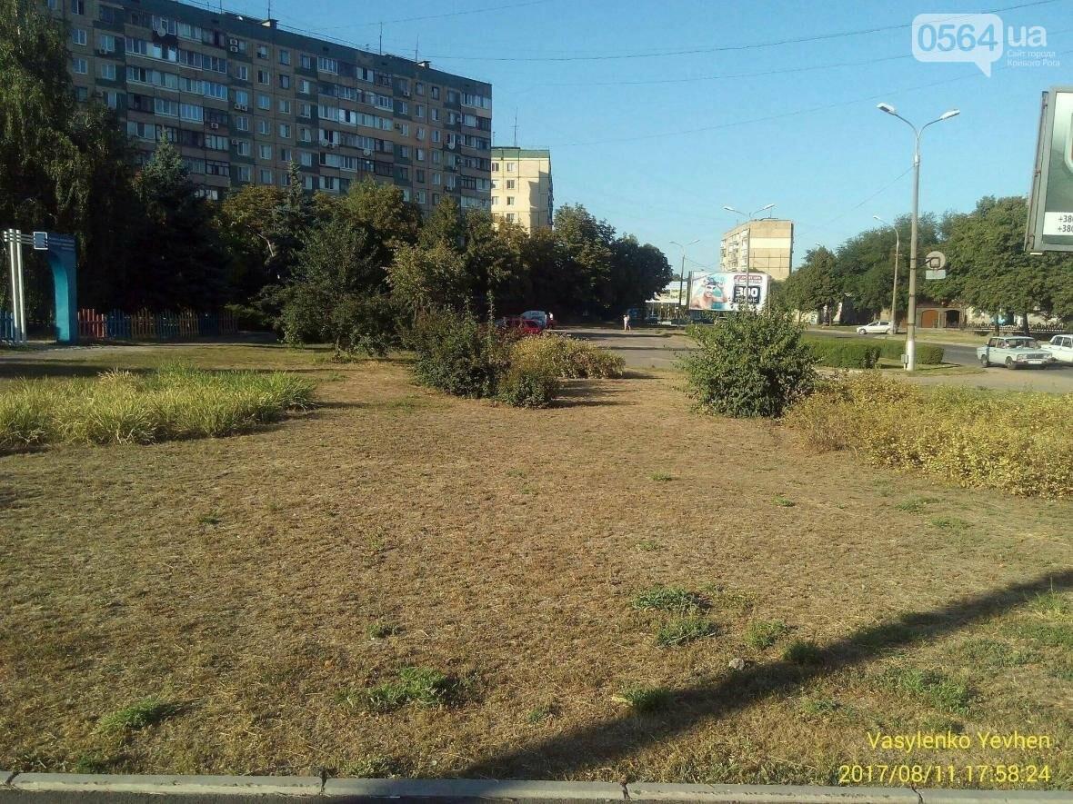 """В Кривом Роге большинство газонов находятся в """"деградированном"""" состоянии (ИНФОГРАФИКА), фото-12"""
