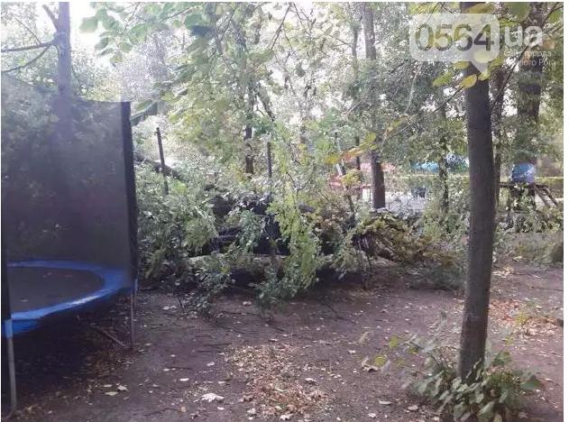 В Кривом Роге: выделили деньги на капремонт квартир, женщина провалилась в колодец, дерево рухнуло на батут, фото-3