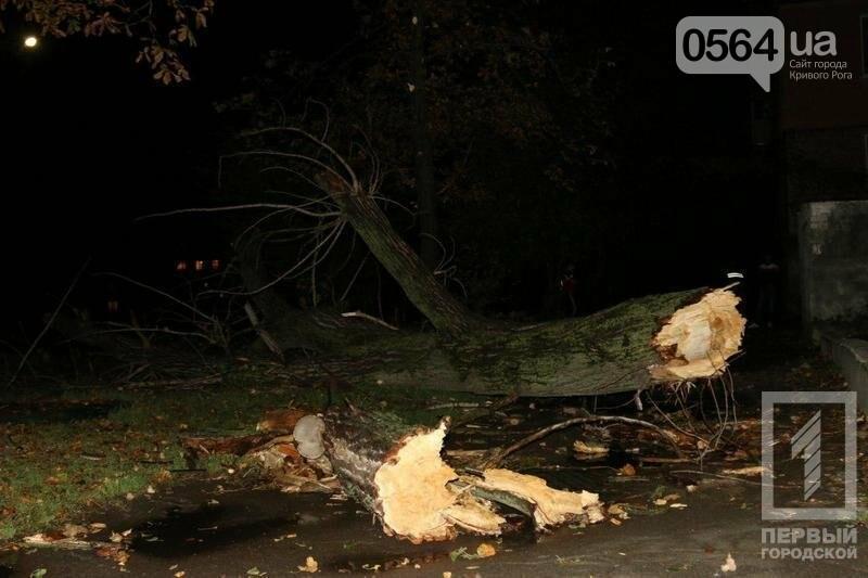 """В Кривом Роге: упавшее дерево убило человека, найдены останки мужчины, встретились """"коммунизм"""" с """"декоммунизацией"""", фото-1"""
