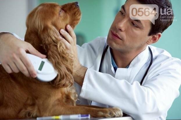 Не понаслышке: Что предусматривает новый законопроект о животных?, фото-1