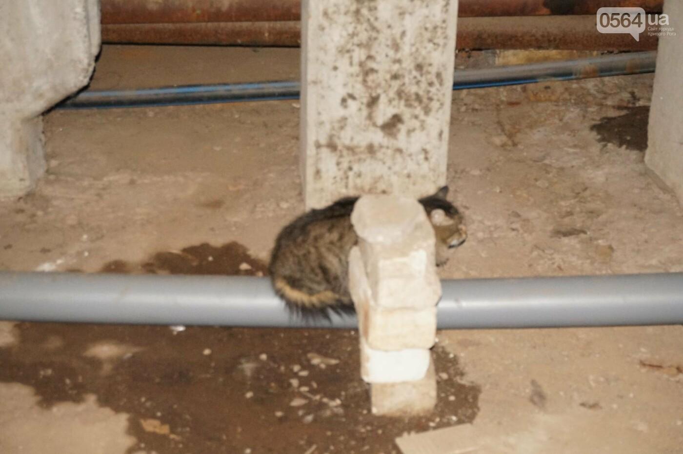 Криворожскую многоэтажку затопило фекалиями (ФОТО, ВИДЕО), фото-8