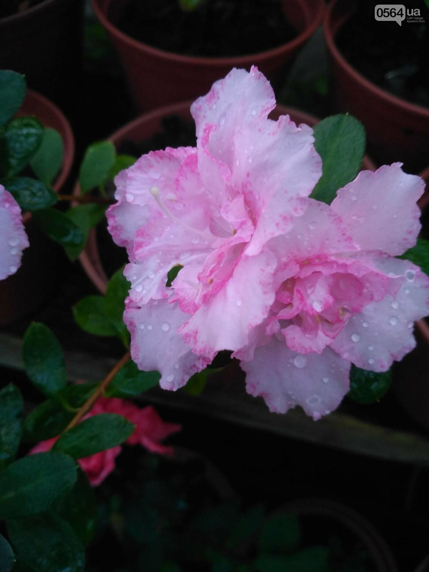 В Криворожском ботаническом саду зацвели сказочные цветы (ФОТО), фото-1