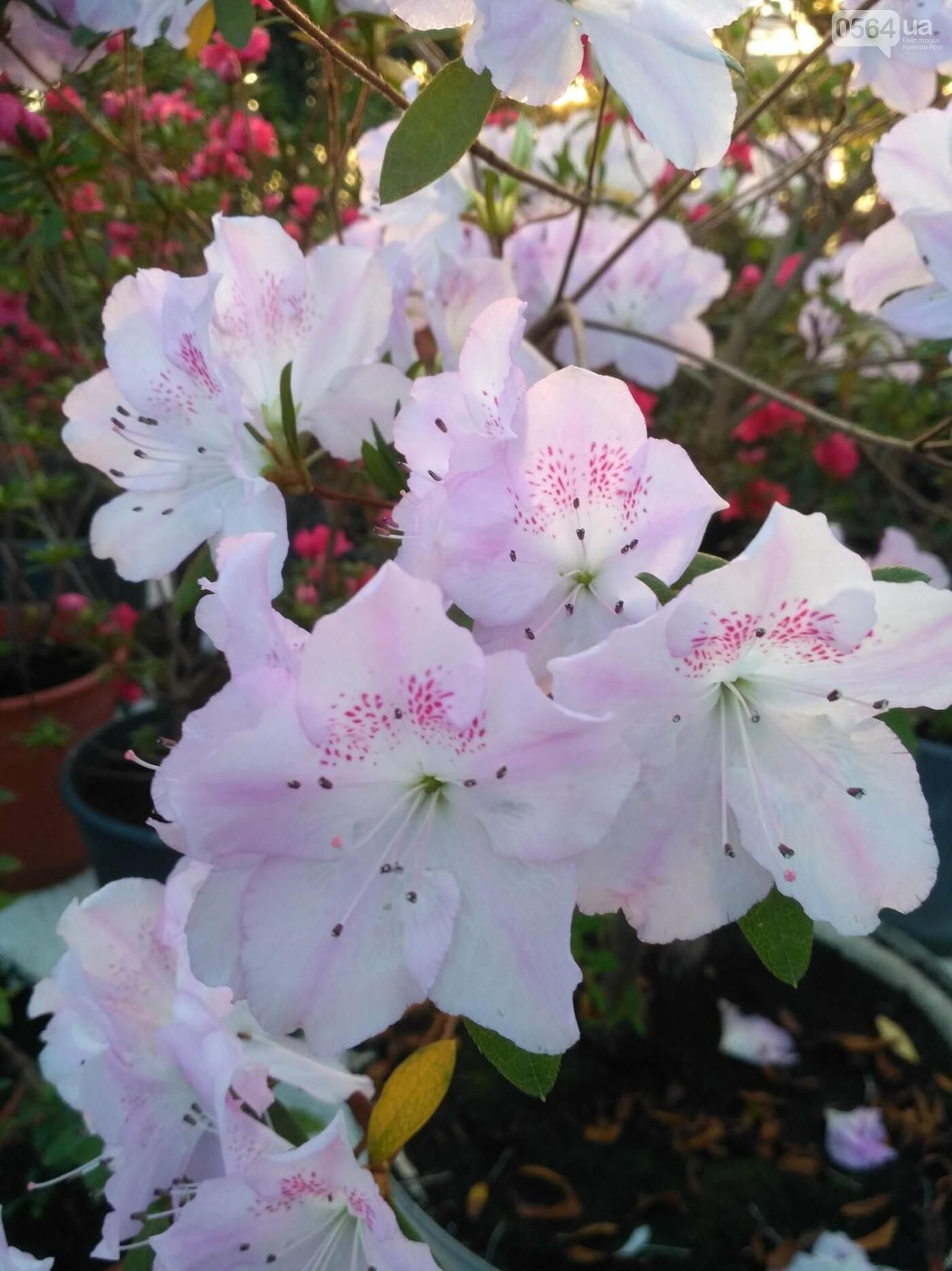 В Криворожском ботаническом саду зацвели сказочные цветы (ФОТО), фото-7