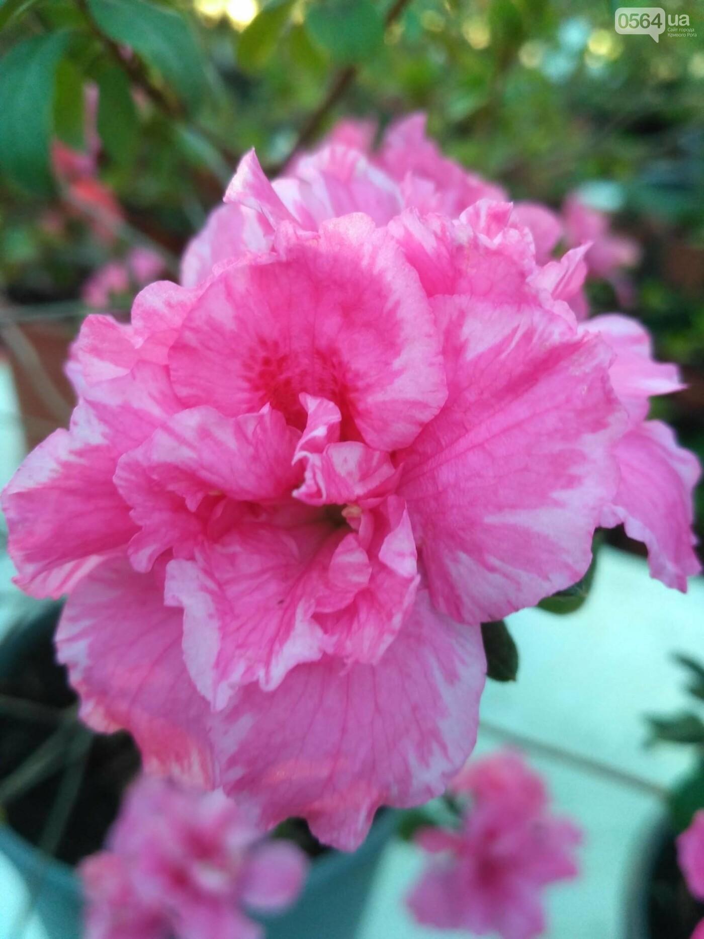 В Криворожском ботаническом саду зацвели сказочные цветы (ФОТО), фото-3