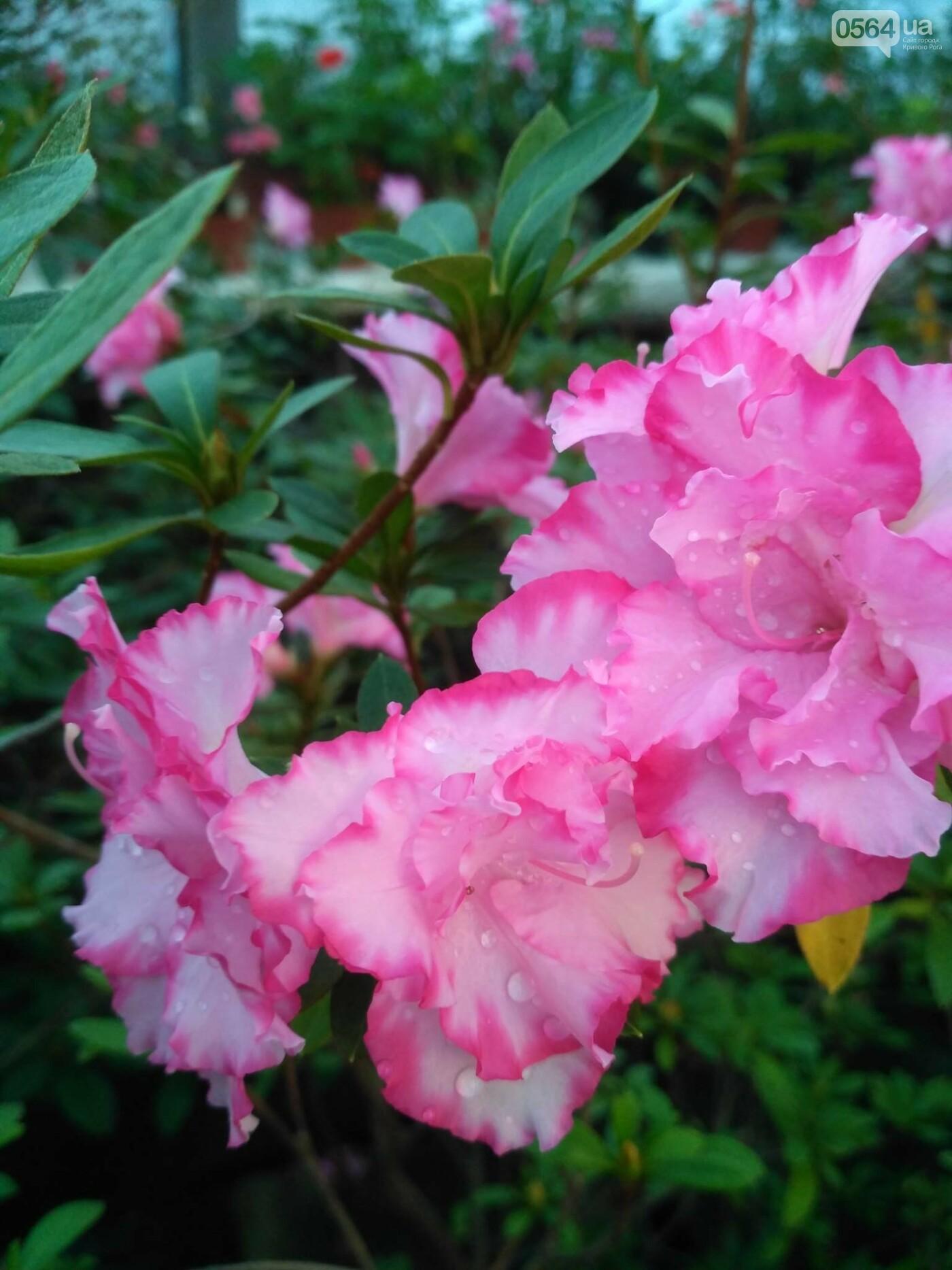 В Криворожском ботаническом саду зацвели сказочные цветы (ФОТО), фото-8
