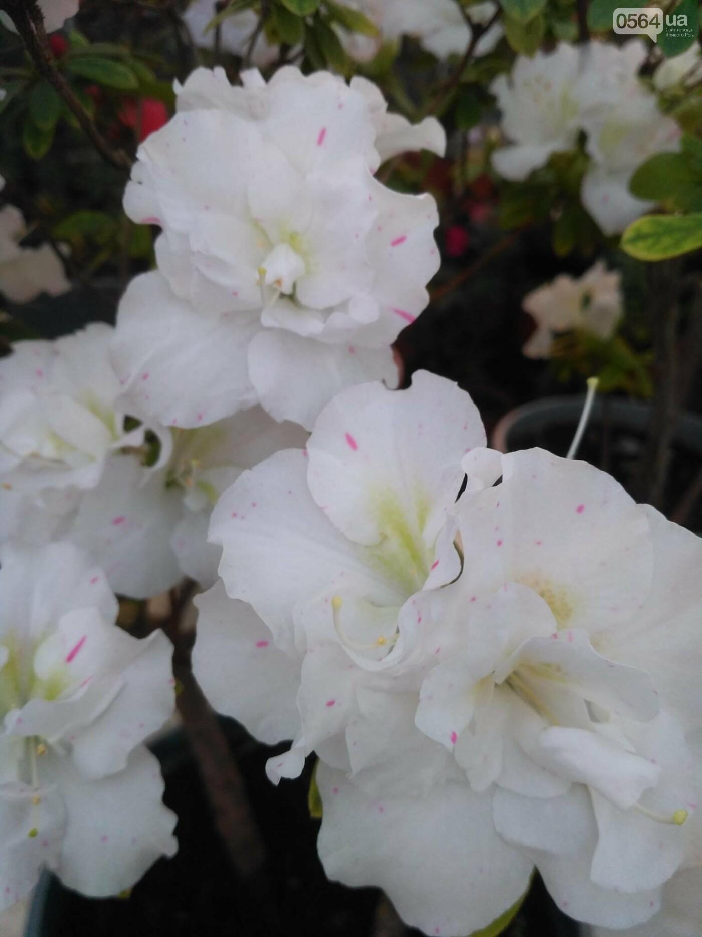 В Криворожском ботаническом саду зацвели сказочные цветы (ФОТО), фото-5