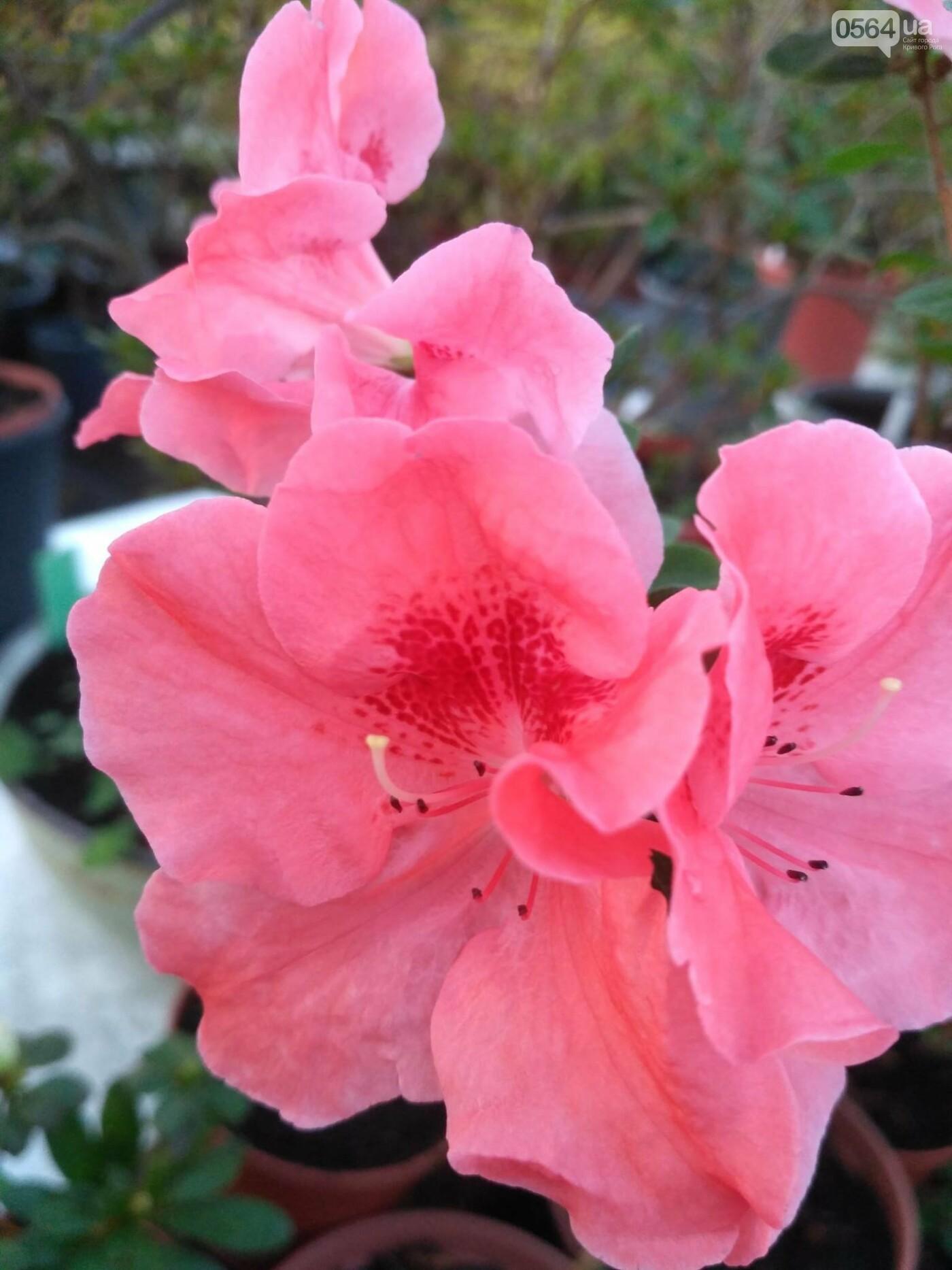 В Криворожском ботаническом саду зацвели сказочные цветы (ФОТО), фото-6