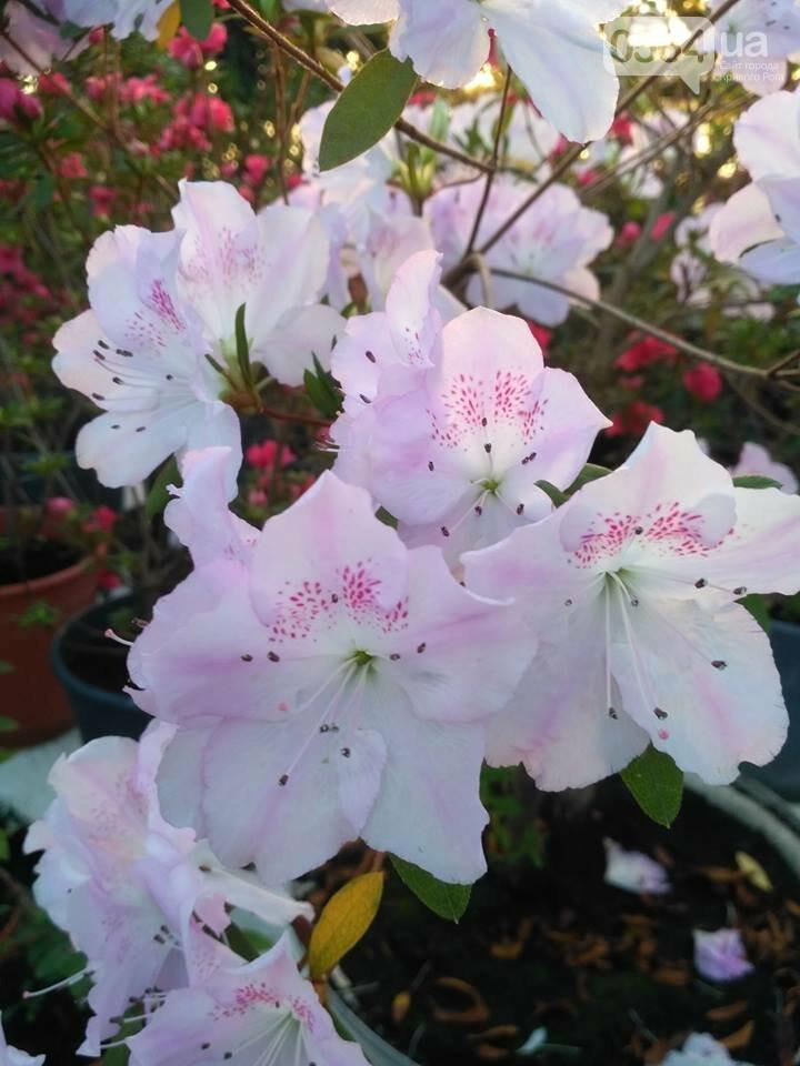 В Криворожском ботаническом саду зацвели сказочные цветы (ФОТО), фото-2