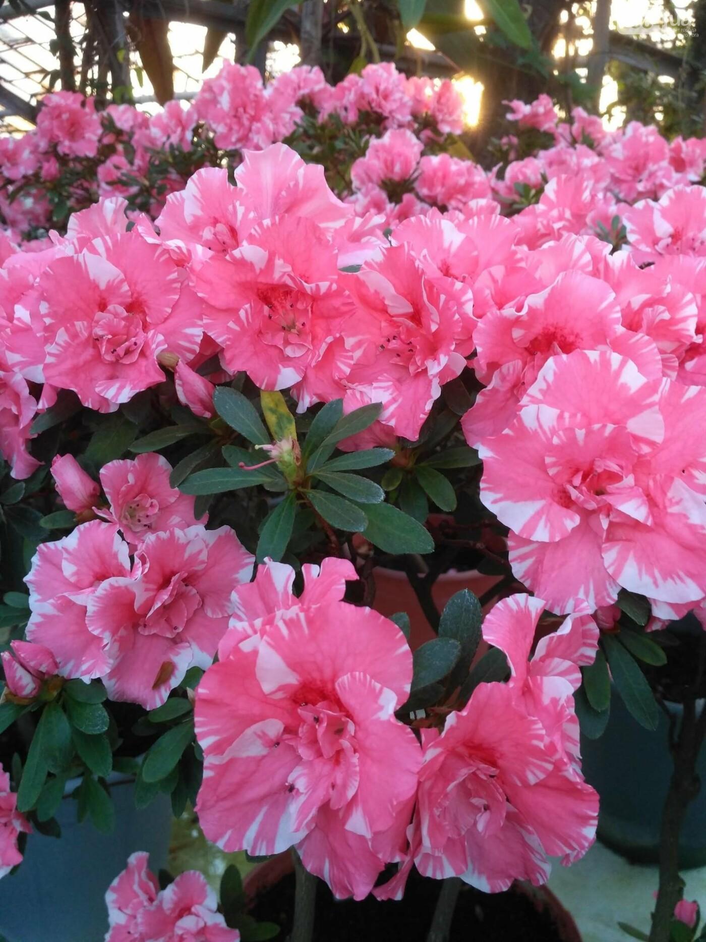 В Криворожском ботаническом саду зацвели сказочные цветы (ФОТО), фото-9
