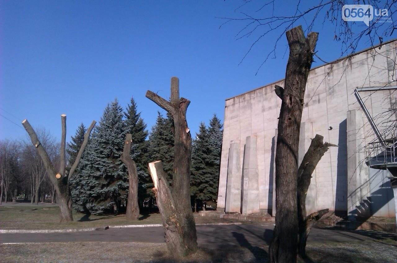 Чтобы не плакали: В Кривом Роге под столб срезали  кроны плакучих ив (ФОТО), фото-3