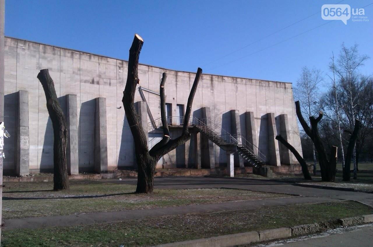 Чтобы не плакали: В Кривом Роге под столб срезали  кроны плакучих ив (ФОТО), фото-4