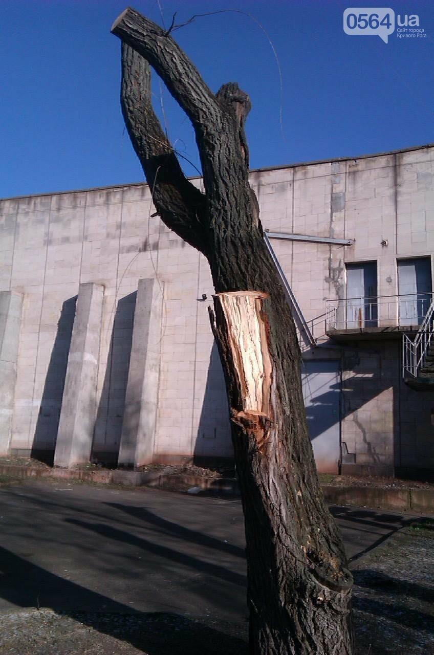 Чтобы не плакали: В Кривом Роге под столб срезали  кроны плакучих ив (ФОТО), фото-2