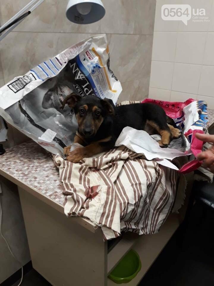 В Кривом Роге из окна 4 этажа выбросили щенка (ФОТО), фото-7