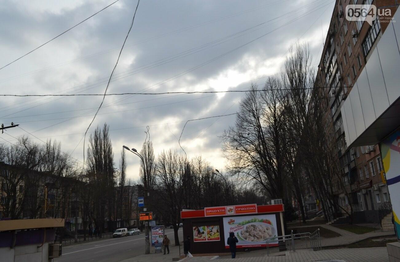 Голубь на проспекте Мира: На электросетях в центре Кривого Рога которую неделю висит несчастная птица (ФОТО 18+), фото-4