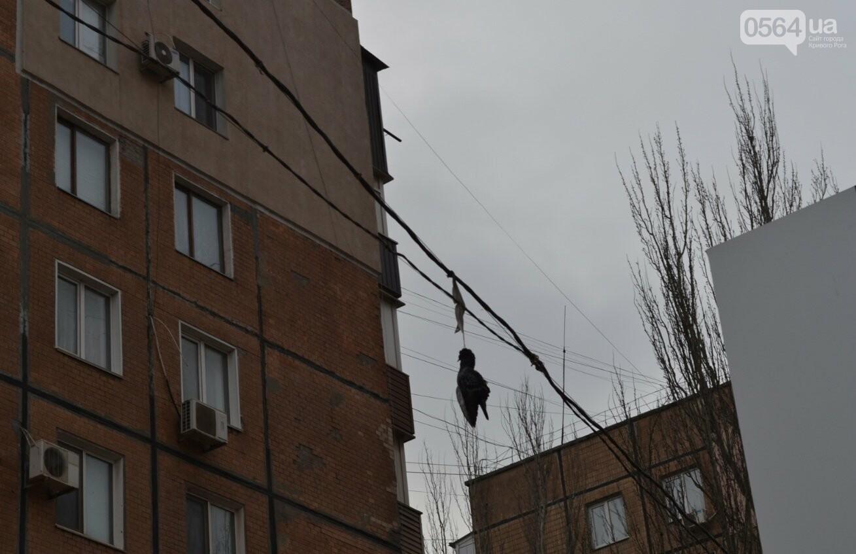Голубь на проспекте Мира: На электросетях в центре Кривого Рога которую неделю висит несчастная птица (ФОТО 18+), фото-3