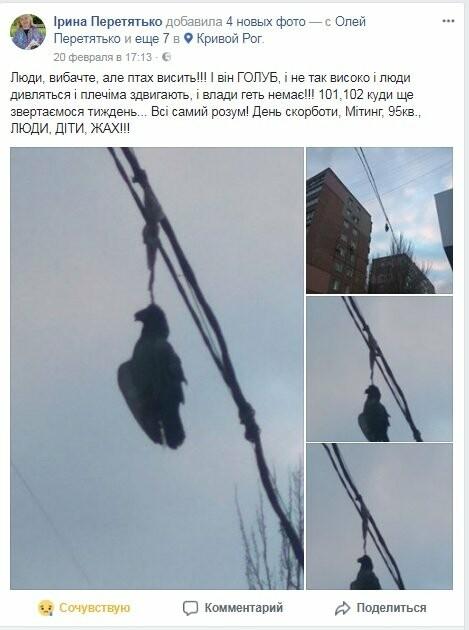 Голубь на проспекте Мира: На электросетях в центре Кривого Рога которую неделю висит несчастная птица (ФОТО 18+), фото-7