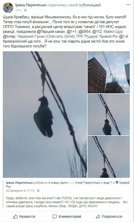 Голубь на проспекте Мира: На электросетях в центре Кривого Рога которую неделю висит несчастная птица (ФОТО 18+), фото-8