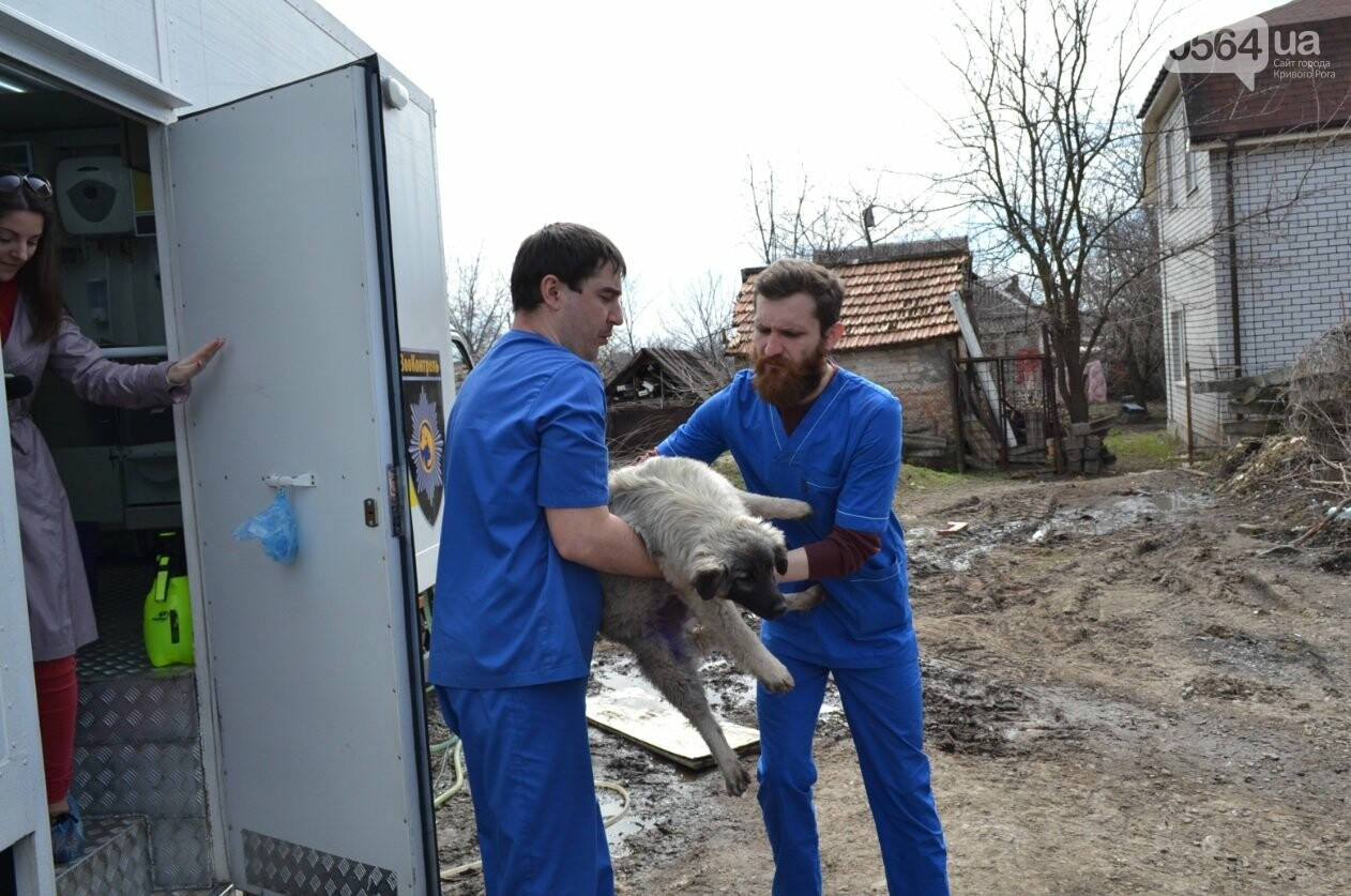 Под Кривым Рогом провели бескровную стерилизацию и вакцинацию бездомных собак в операционной на колесах (ФОТО, ВИДЕО), фото-20
