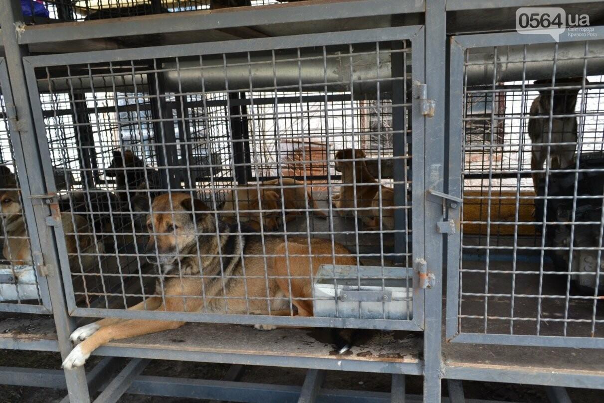Под Кривым Рогом провели бескровную стерилизацию и вакцинацию бездомных собак в операционной на колесах (ФОТО, ВИДЕО), фото-22
