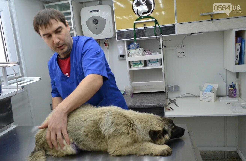Под Кривым Рогом провели бескровную стерилизацию и вакцинацию бездомных собак в операционной на колесах (ФОТО, ВИДЕО), фото-14