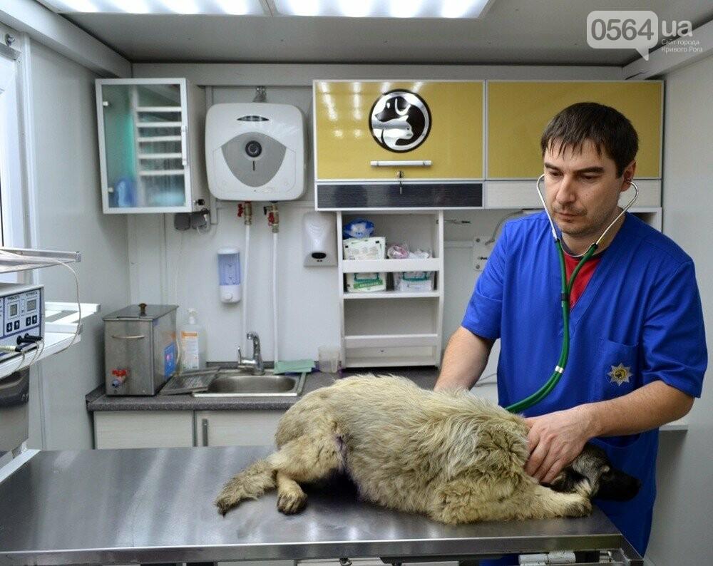 Под Кривым Рогом провели бескровную стерилизацию и вакцинацию бездомных собак в операционной на колесах (ФОТО, ВИДЕО), фото-3