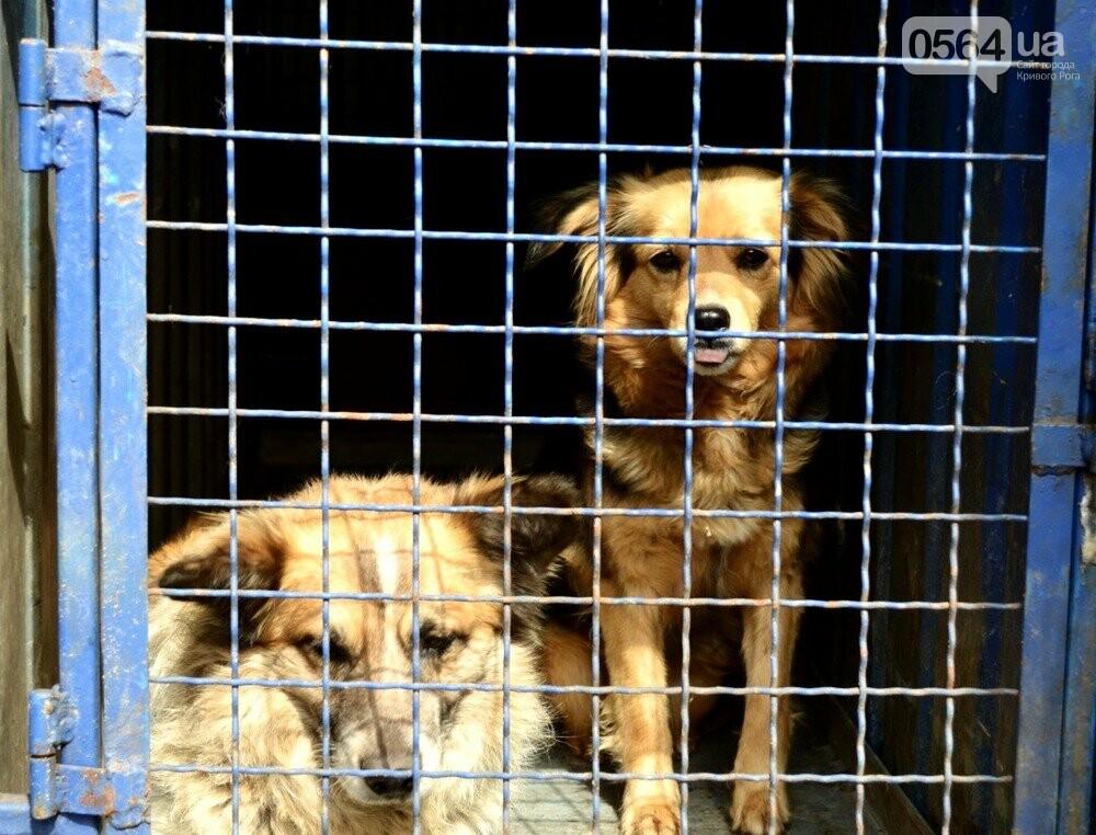 Под Кривым Рогом провели бескровную стерилизацию и вакцинацию бездомных собак в операционной на колесах (ФОТО, ВИДЕО), фото-9