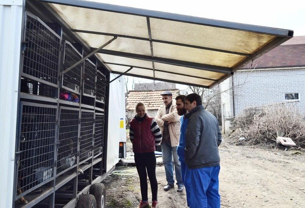 Под Кривым Рогом провели бескровную стерилизацию и вакцинацию бездомных собак в операционной на колесах (ФОТО, ВИДЕО), фото-8