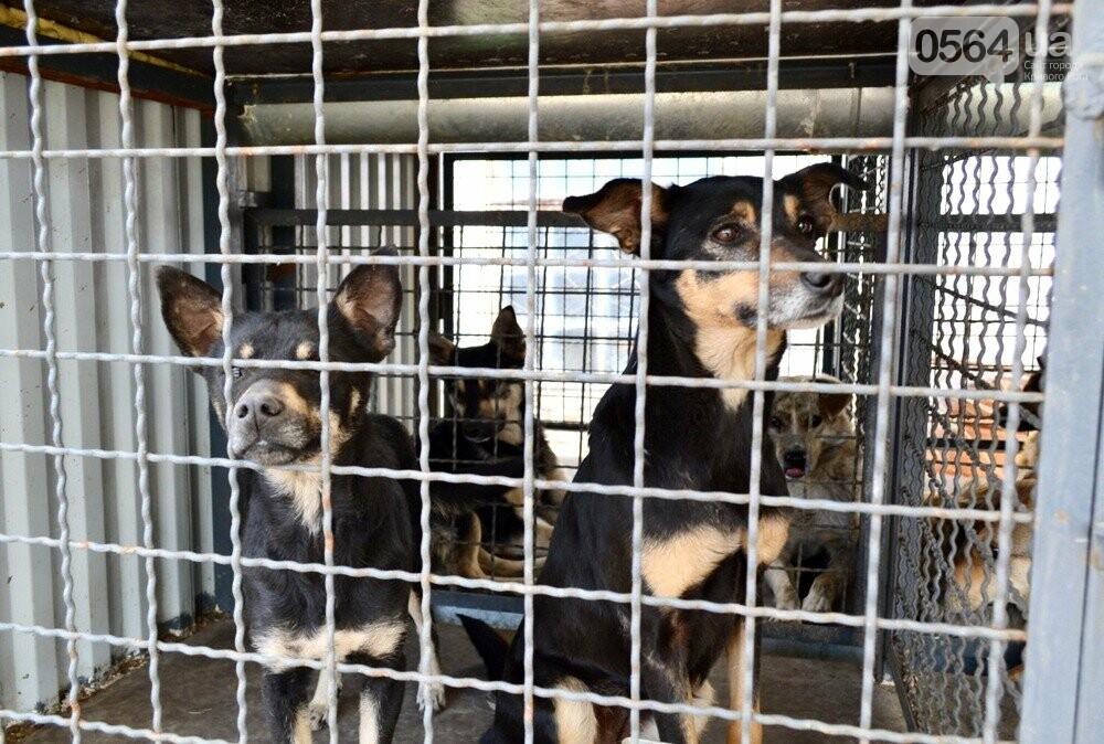 Под Кривым Рогом провели бескровную стерилизацию и вакцинацию бездомных собак в операционной на колесах (ФОТО, ВИДЕО), фото-7