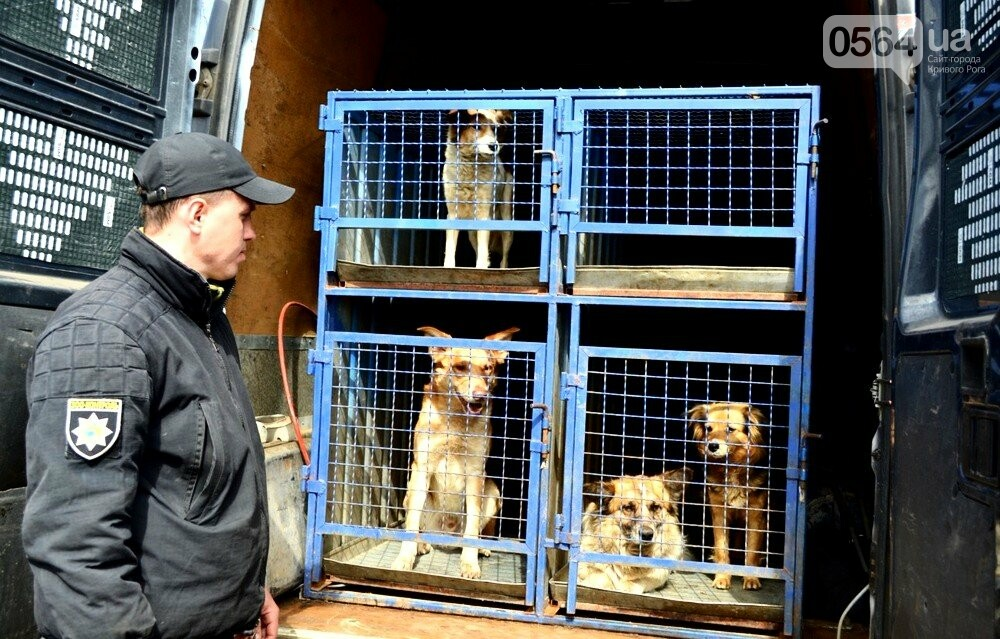 Под Кривым Рогом провели бескровную стерилизацию и вакцинацию бездомных собак в операционной на колесах (ФОТО, ВИДЕО), фото-2