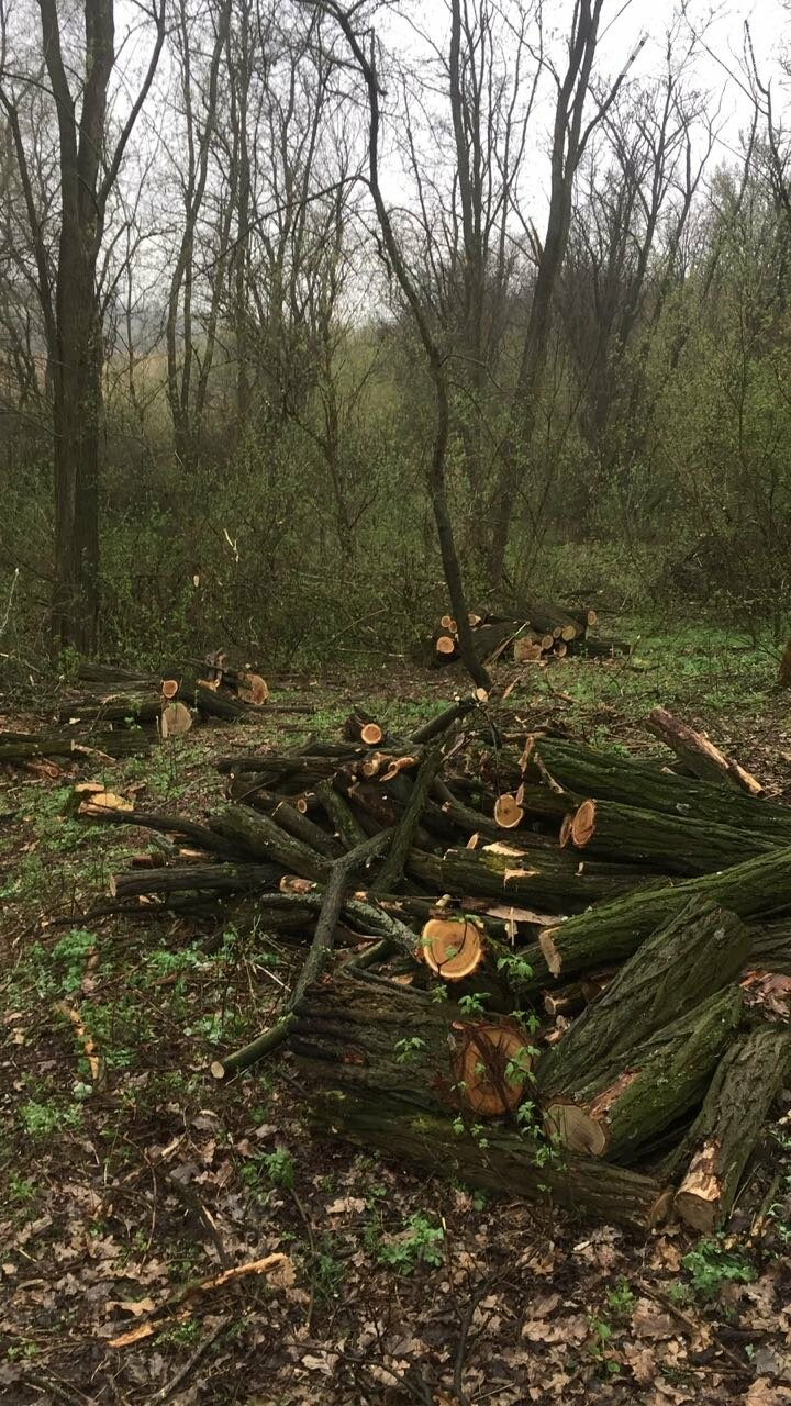 Прокуратура: В Кривом Роге лес уничтожали те, кто должен был его защищать (ФОТО), фото-7
