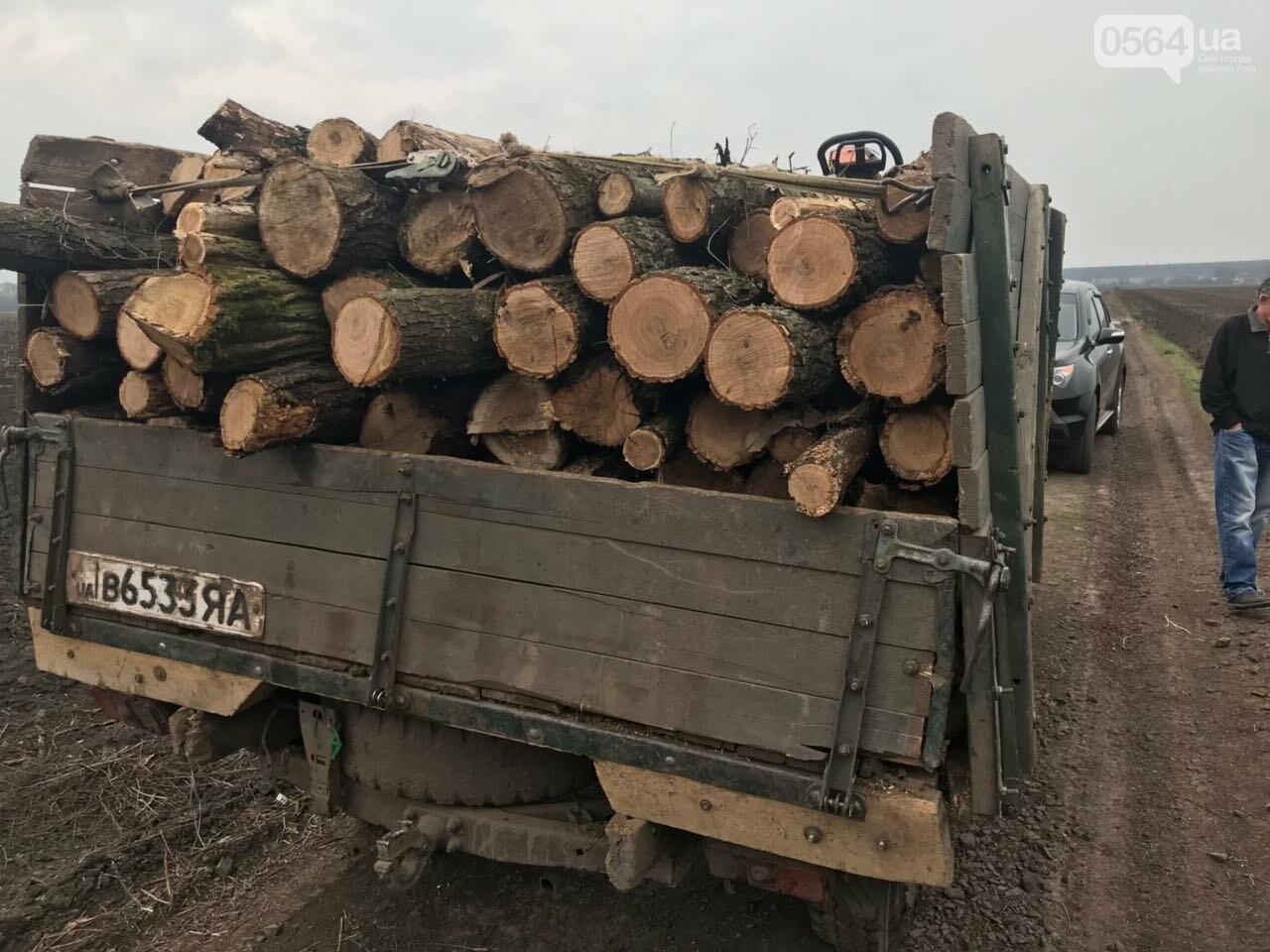 Прокуратура: В Кривом Роге лес уничтожали те, кто должен был его защищать (ФОТО), фото-4
